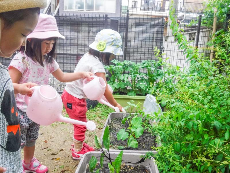 庭で育てる