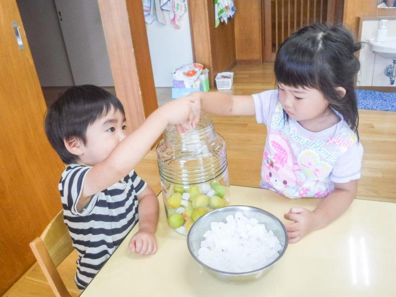 夏:梅ジュース作り とうもろこしの皮むき きゅうりの塩もみ